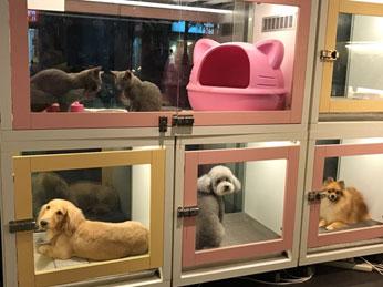 寵物等待室