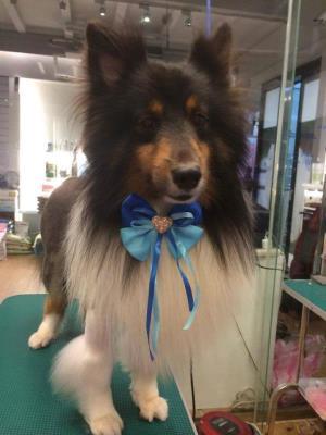 狗狗寵物美容