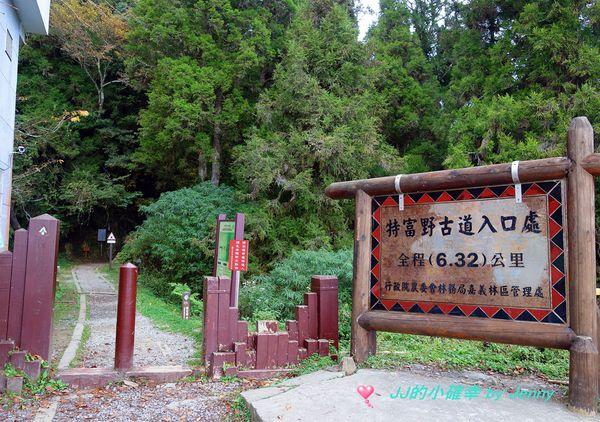 特富野古道+鹿林神木