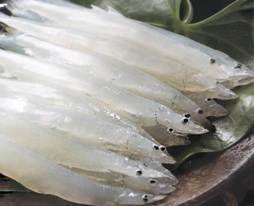 銀魚(大)