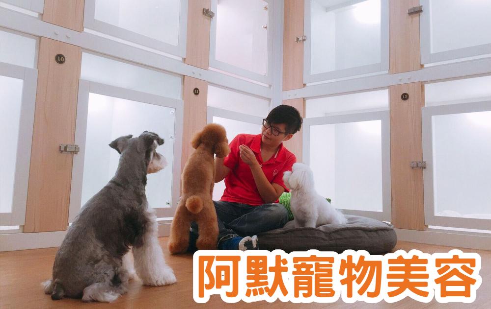 台北寵物美容-寵物美容證照保證班|阿默寵物美學