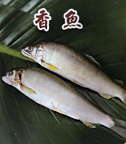 香魚(公)