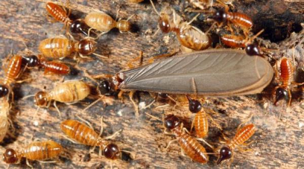 木製裝潢做好噴藥及填縫措施,能有效防止白蟻進駐