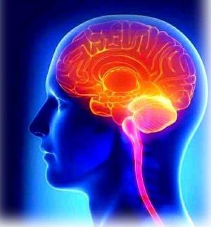 大腦的強力排毒功能