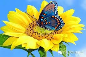 花若芬芳 蝴蝶自來