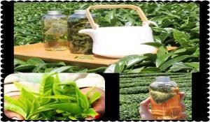 【台茶12號金萱茶】自然農法上市