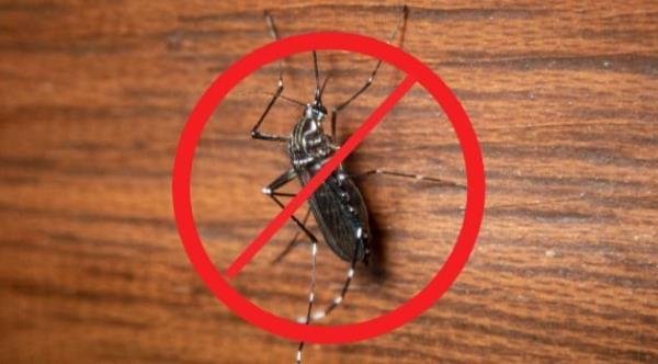 除蟲要做得徹底,才能有效免除後患,阻止害蟲進駐
