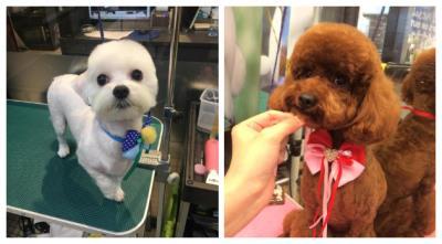 為什麼要寵物美容?|台北阿默寵物美學
