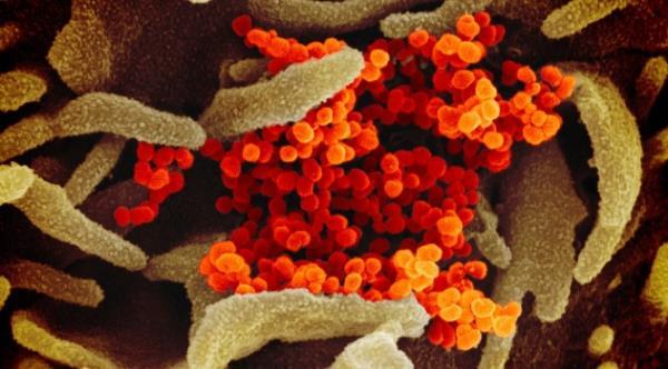 斷食增強身體免疫力,抵抗新冠病毒侵襲